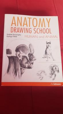 anatomy drawing school human and animal