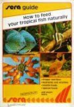 How to feed your tropical fish naturally